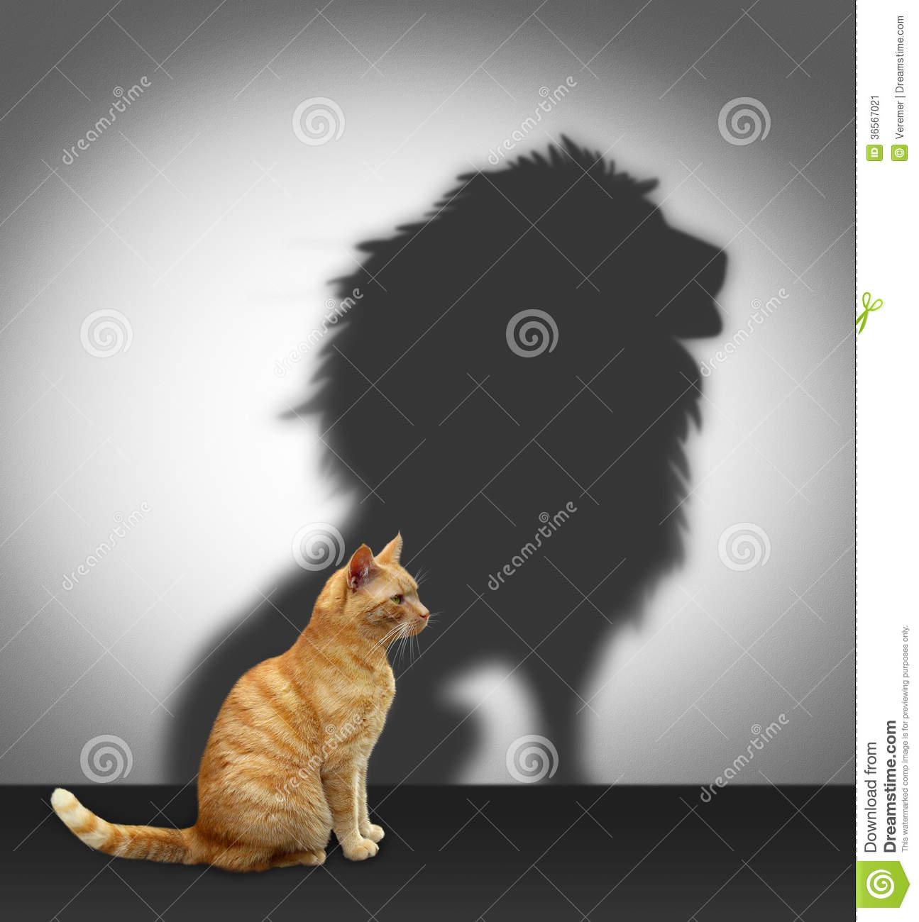 chat-avec-l-ombre-de-lion-36567021
